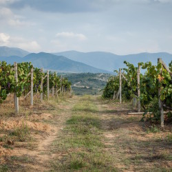 A view from the vine yard towards Greece.
